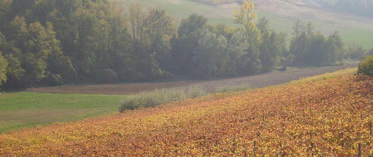Vigna d'autunno