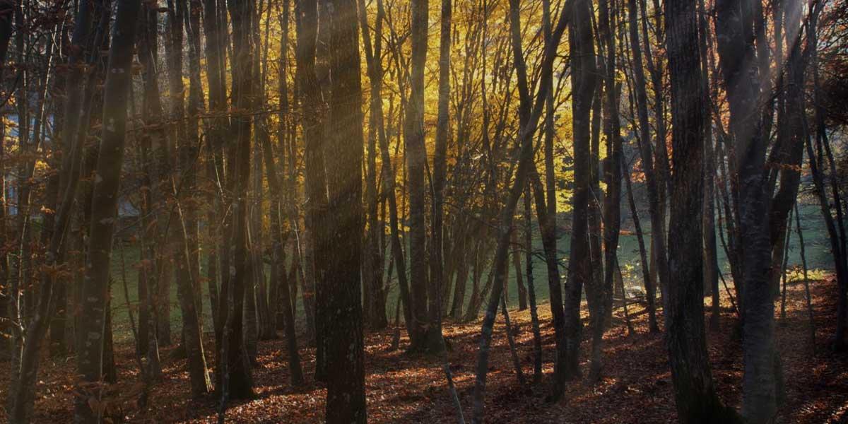 Parco del Monte Moria in autunno